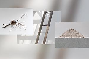 Ash, Ladder & Nest